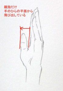 手 描き方 横から 親指